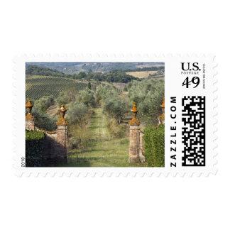 Vineyards, Tuscany, Italy Postage Stamp
