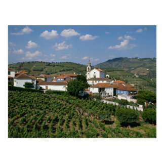 Vineyards, Village of San Miguel, Douro Postcard