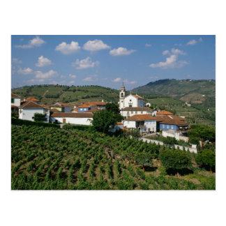 Vineyards, Village of San Miguel, Douro Postcard