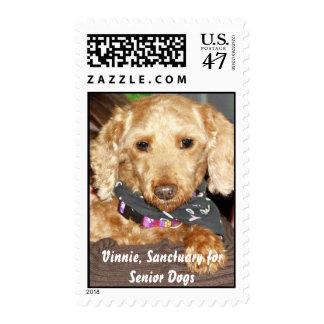 Vinnie, santuario para los perros mayores timbres postales