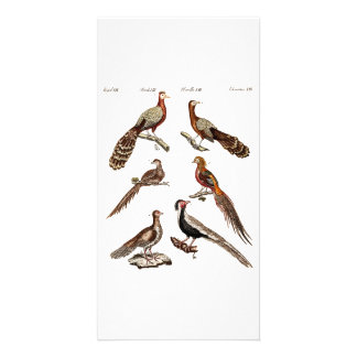 Vintage 1700s Pheasant Game Birds - Pheasant Bird Card