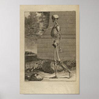 Vintage 1749 Skeleton Anatomy Print