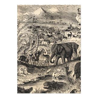 Vintage 1800s African Animal Illustration Animals Card