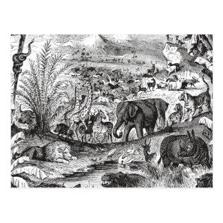 Vintage 1800s African Animal Illustration Animals Post Card