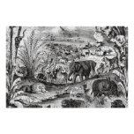 Vintage 1800s African Animal Illustration Animals Poster
