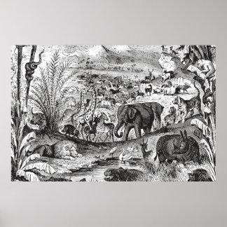 Vintage 1800s African Animal Illustration Animals Poster
