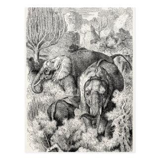 Vintage 1800s African Elephant - Elephants Postcard