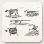 Vintage 1800s Animal Skeletons Antique Anatomy Beverage Coaster