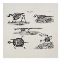 Vintage 1800s Animal Skeletons Antique Anatomy Poster
