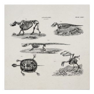 Vintage 1800s Animal Skeletons Antique Anatomy Posters