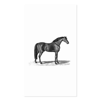 Vintage 1800s Arabian Horse Illustration - Horses Double-Sided Standard Business Cards (Pack Of 100)