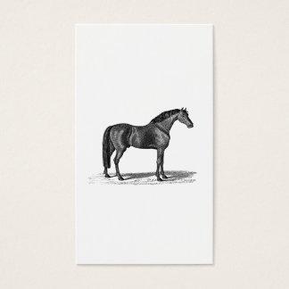 Vintage 1800s Arabian Horse Illustration - Horses Business Card