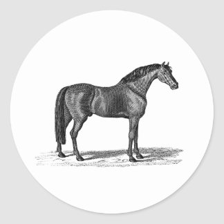 Vintage 1800s Arabian Horse Illustration - Horses Classic Round Sticker
