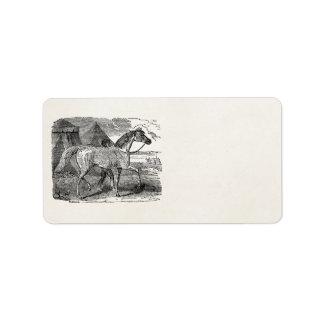 Vintage 1800s Arabian Horse Pyramid Illustration Label