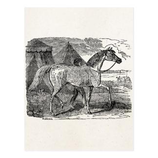 Vintage 1800s Arabian Horse Pyramid Illustration Postcard