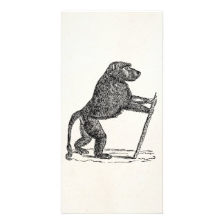 Vintage 1800s Baboon Walking Stick Monkey Baboons Card