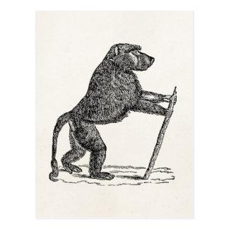 Vintage 1800s Baboon Walking Stick Monkey Baboons Postcard