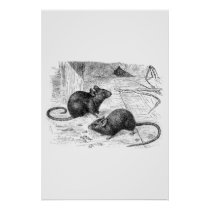 Vintage 1800s Barn Mouse Retro Mice Illustration Poster