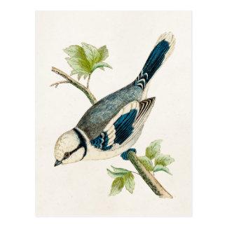 Vintage 1800s Blue Bird Songbird Birds Drawing Postcard