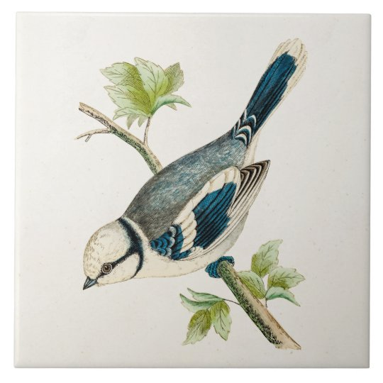 Vintage 1800s Blue Bird Songbird Birds Drawing Tile