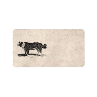 Vintage 1800s Border Collie Dog Illustration Label
