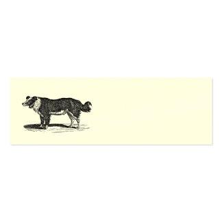 Vintage 1800s Border Collie Dog Illustration Mini Business Card