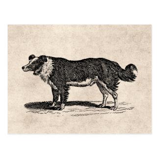 Vintage 1800s Border Collie Dog Illustration Postcard