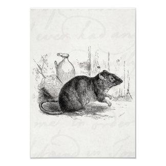 Vintage 1800s Brown Barn Rat Rats Illustration Card
