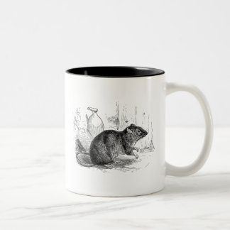 Vintage 1800s Brown Barn Rat Rats Illustration Two-Tone Coffee Mug