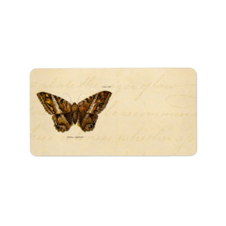 Vintage 1800s Brown Fuzzy Moth Template Butterfly Label