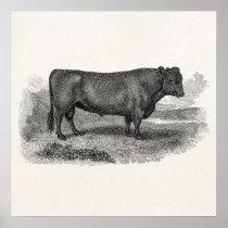 Vintage 1800s Bull Illustration Retro Cow Bulls Poster