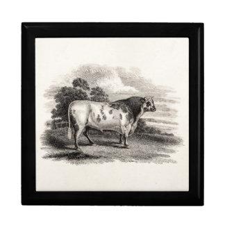 Vintage 1800s Bull Old Agricultural White Bulls Keepsake Box