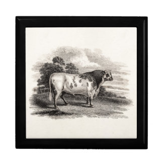 Vintage 1800s Bull Old Agricultural White Bulls Jewelry Box