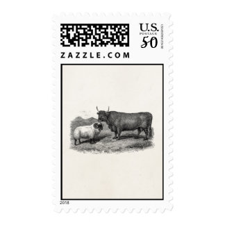 Vintage 1800s Bull Sheep Illustration Retro Farm Postage
