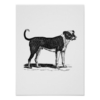 Vintage 1800s Bulldog Dog Illustration - Dogs Posters