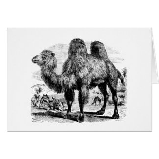 Vintage 1800s Camel -  Egyptian Camels Template Card