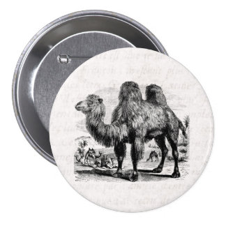 Vintage 1800s Camel -  Egyptian Camels Template Pinback Button