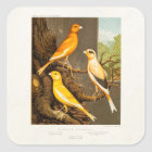 Vintage 1800s Canary Song Bird Template Canaries Square Sticker