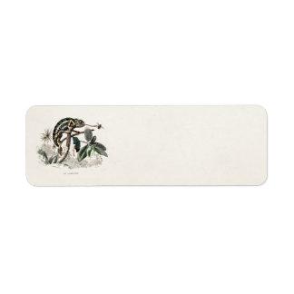 Vintage 1800s Chameleon Lizard Retro Chameleons Label