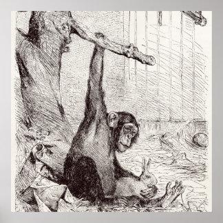 Vintage 1800s Chimpanzee Rabbit Monkey Bunny Chimp Print
