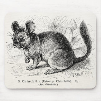 Vintage 1800s Chinchilla Chinchillas Illustration Mouse Pad