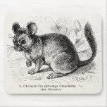 Vintage 1800s Chinchilla Chinchillas Illustration Mouse Pad
