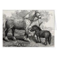 Vintage 1800s Clydesdale Horse Highland Pony Card