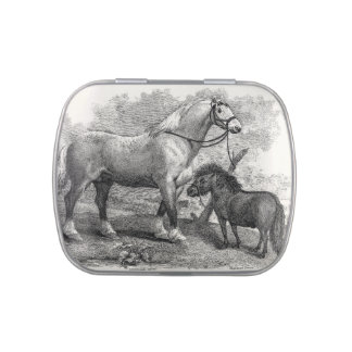 Vintage 1800s Clydesdale Horse Highland Pony Jelly Belly Candy Tin