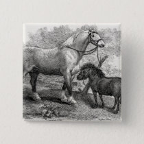 Vintage 1800s Clydesdale Horse Highland Pony Pinback Button