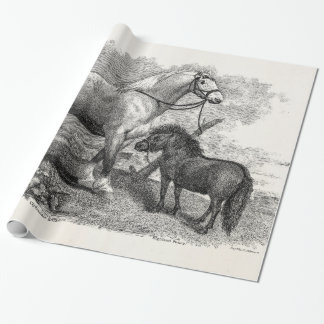 Vintage 1800s Clydesdale Horse Highland Pony Wrapping Paper