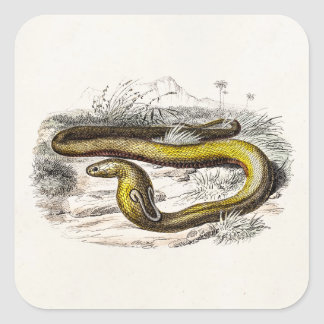Vintage 1800s Cobra Snake Retro Cobras Drawing Square Stickers