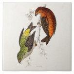 Vintage 1800s Crossbill Bird Illustration Birds Large Square Tile