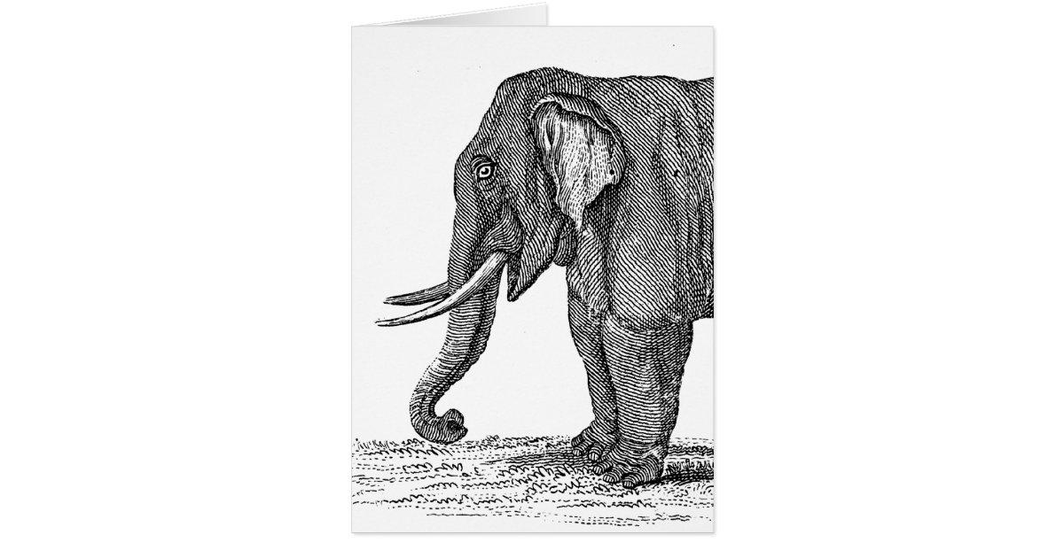 Vintage 1800s Elephant Illustration - Elephants Card | Zazzle Vintage Elephant Illustration