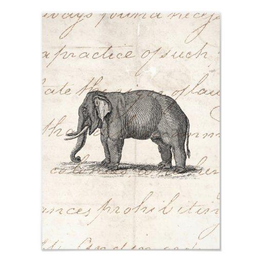 Vintage 1800s Elephant Illustration - Elephants Art PhotoVintage Elephant Illustration